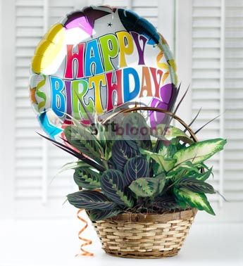 36 best birthday balloons delivery usa images on pinterest allens flowers and plants creates unique and custom planter baskets great for a birthday gift negle Gallery