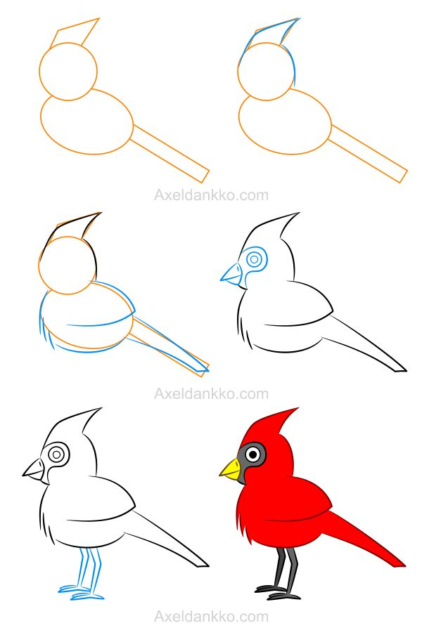 How to draw a cardinal - Comment dessiner un cardinal