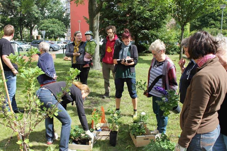 Die Pflanzen vor dem Einzug in den Nachbarschaftsgarten der Berliner Wohnungsbaugenossenschaft Berolina.