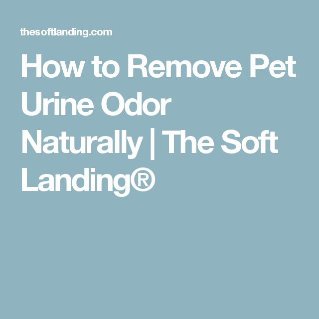 How to Remove Pet Urine Odor Naturally | The Soft Landing®