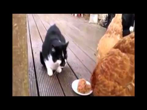 Funny Animal Cats and Dogs Video Clips  Fail  2015