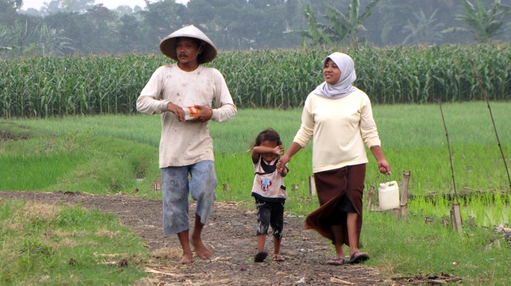 Petani Tradisional Indonesia