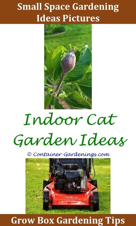 Gargen Container Water Garden Ideas Nz Native Garden Design Ideas