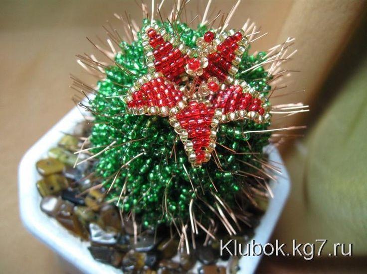 cactus | bugna