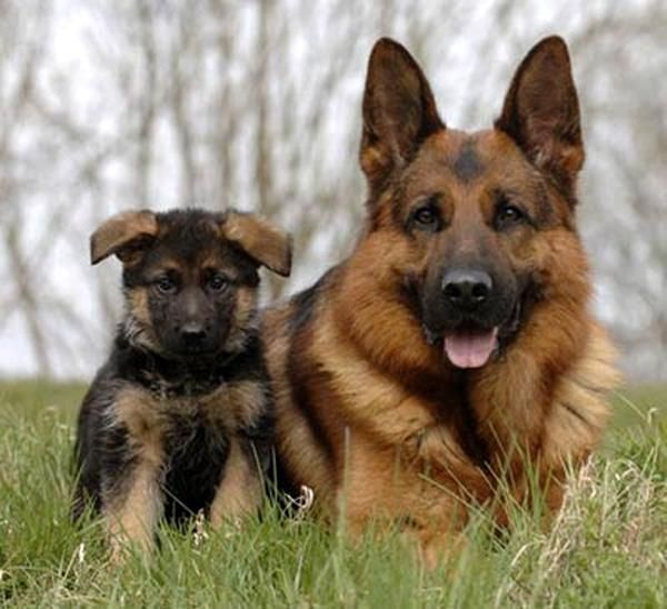 DE TODO UN POCO: ¿Cuál es tu perro ideal según tu personalidad?