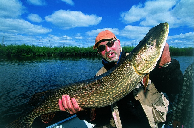 Anglers come to battle the gigantic northern pike of Manitoba.