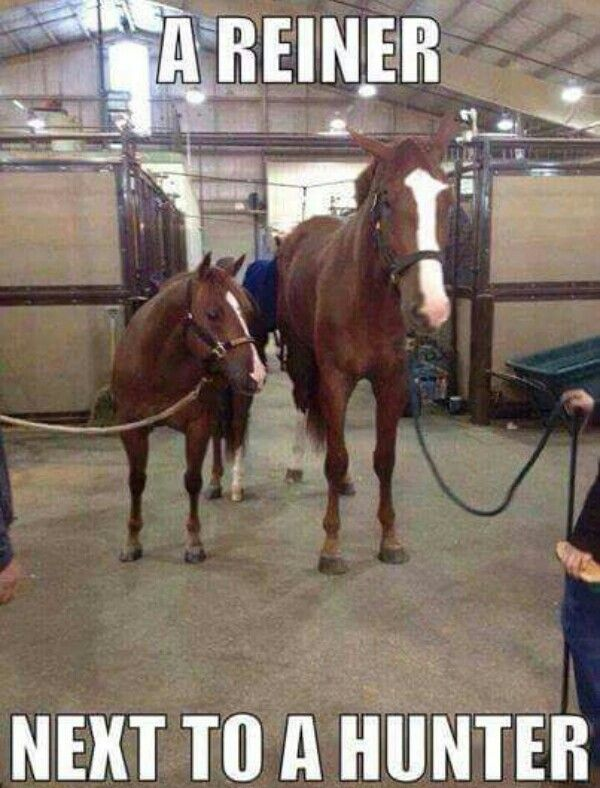 Non equestrians won't be able to tell which is which haha
