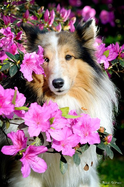 """Click visit site and Check out Cool """"SHELTIE"""" T-shirts. This website is excellent. Tip: You can search """"your name"""" or """"your favorite shirts"""" at search bar on the top."""