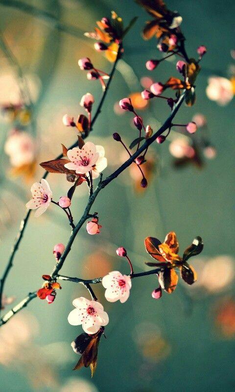 Flowers, pink, blue, green, orange