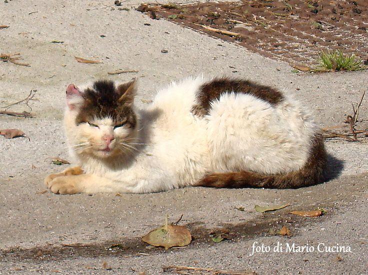 """Una foto scattata da un nostro lettore ieri a Palermo, esattamente nel viale Giunone di Mondello, con un gatto che si crogiola al sole della Sicilia nel giorno, venerdì 17, della """"Festa del Gatto"""""""
