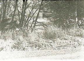 Crime scene where Diane Downs shot her 3 children on May 19, 1983
