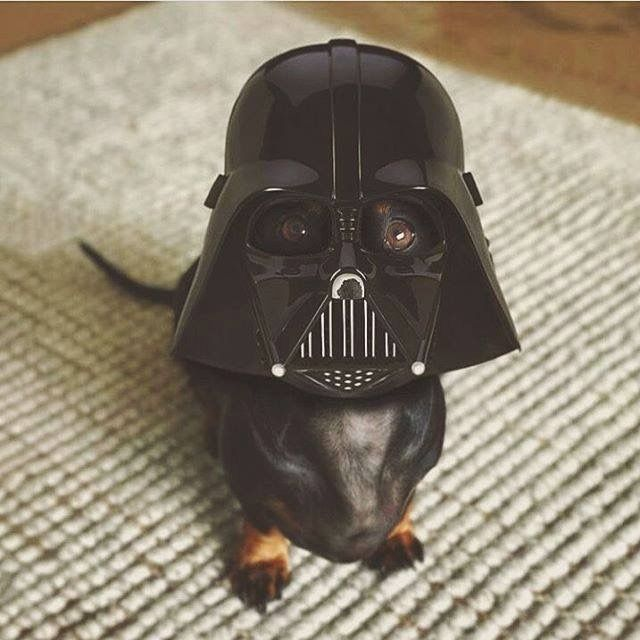 Luke, I'm your dachshund!