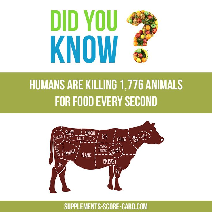 This is sad :(Humans are killing 1766 animals for food every second.