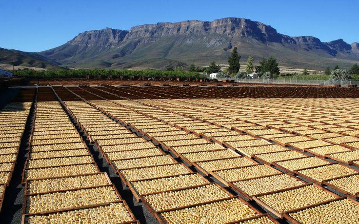 Pears sun-drying on Koelfontein  http://ceciliasfarm.co.za/