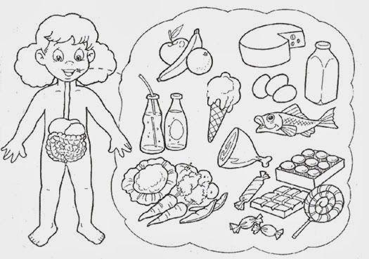 actividades del sistema digestivo para niños para imprimir - Buscar con Google