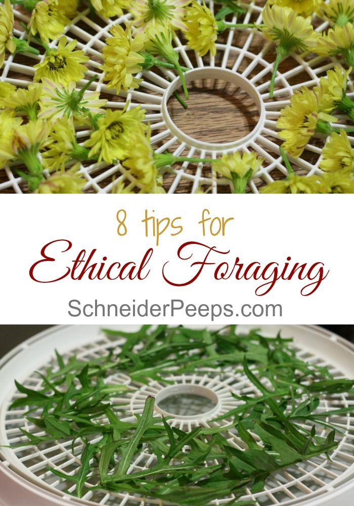 Ethical foraging ensures that there will be edible and medicinal wild plants…