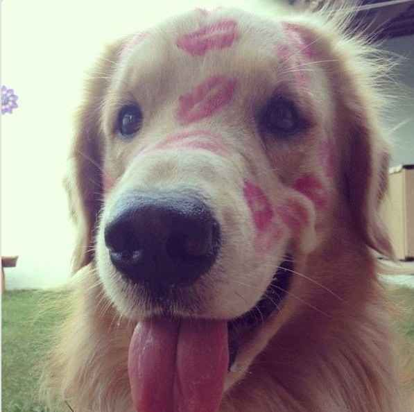 KISSES FOR EVERYONE. | 60 Times Golden Retrievers Were So Adorable You Wanted To Cry