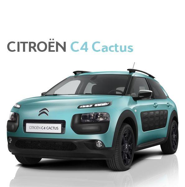 C4 Cactus