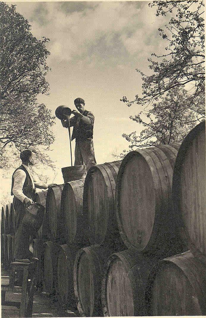 Trasiego de Vinos Gordos. / The Transferring of Aged Wines.