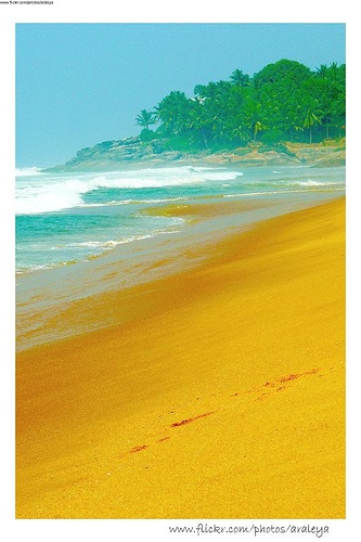 Kerala Beaches (India). 'Kovalam and Varkala,  with their crescent-shaped  white-sand beaches, palm  trees, lighthouse (Kovalam) and  dramatic cliffs (Varkala), are a  vision.' http://www.lonelyplanet.com/india/kerala/kovalam
