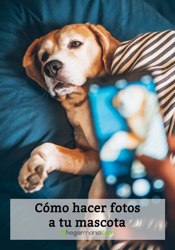 How to take photos of your pet - We bring you these simple tips to learn how to portray your hairy and make him a supermodel. Rare Animals, Animals And Pets, Funny Animals, Funny Animal Videos, Pet Shop, How To Take Photos, Pet Care, Pugs, Cute Dogs