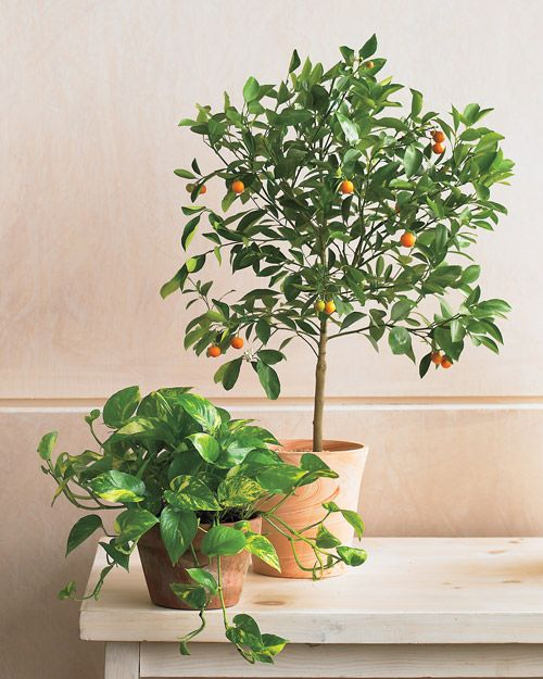 indoor plants article. Tip: To get rid of bugs in houseplants, push a clove of garlic into the plant's soil. If the garlic sprouts and grows, just cut it back.