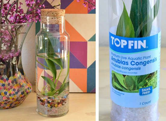 Water-Loving Plants - Place a water-loving plant in a fully-enclosed mini aquarium, and you need not worry again, as Allison from Dream a Little Bigger has learned. The fish department at your local pet store should have plenty of water plants to choose from.