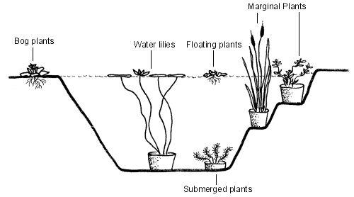 best 25  watering plants ideas on pinterest