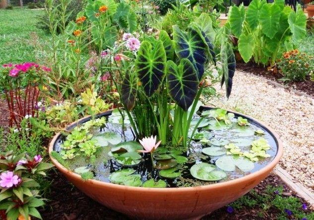 อ างบ ว1 Patio Container Gardening Container Water Gardens Indoor Water Garden