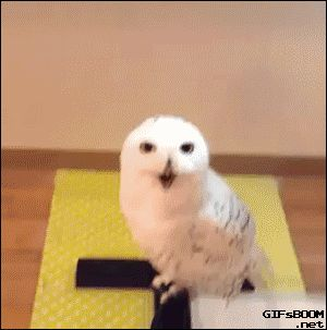 tastefullyoffensive: What even are owls.