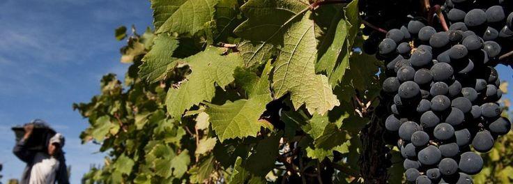 fair trade wine