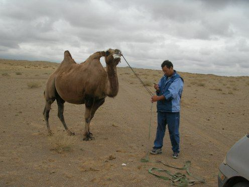 """Ch 39 IGMBIC, """"Yeah, I catch camel,"""" Future said. """"No way,"""" I said. """"I is professional. I know it camels,"""" he said. """"This fuming camel was about to become our personal tow truck."""