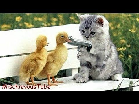 VERY FUNNY ANIMAL VIDEOS  FUNNIEST ANIMALS FAILS COMPILATION  TRY NOT ...