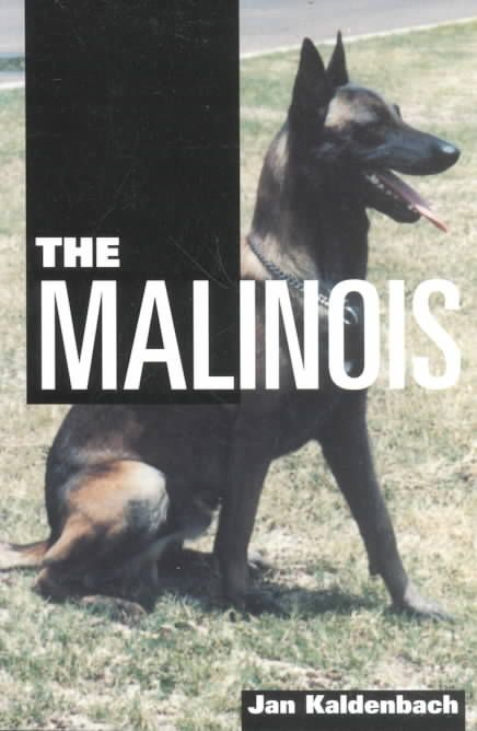 The Belgian Malinois, prized for its obedience in training and high energy…