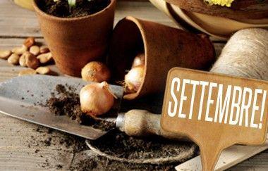 Cosa coltivare a settembre?   Giardinieri in affitto