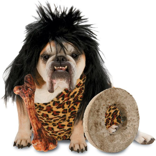 Funny Dog Costume Caveman Picture