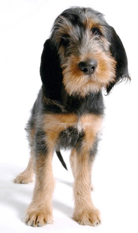 Otterhounds are the best dogs. They grow fast.