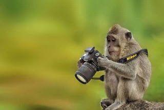Gambar lucu-hewan lucu jadi fotografer | All in gadget