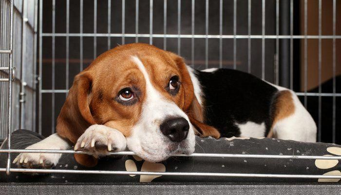 Stop Dogs From Barking Puppybiting Housetrainingadog