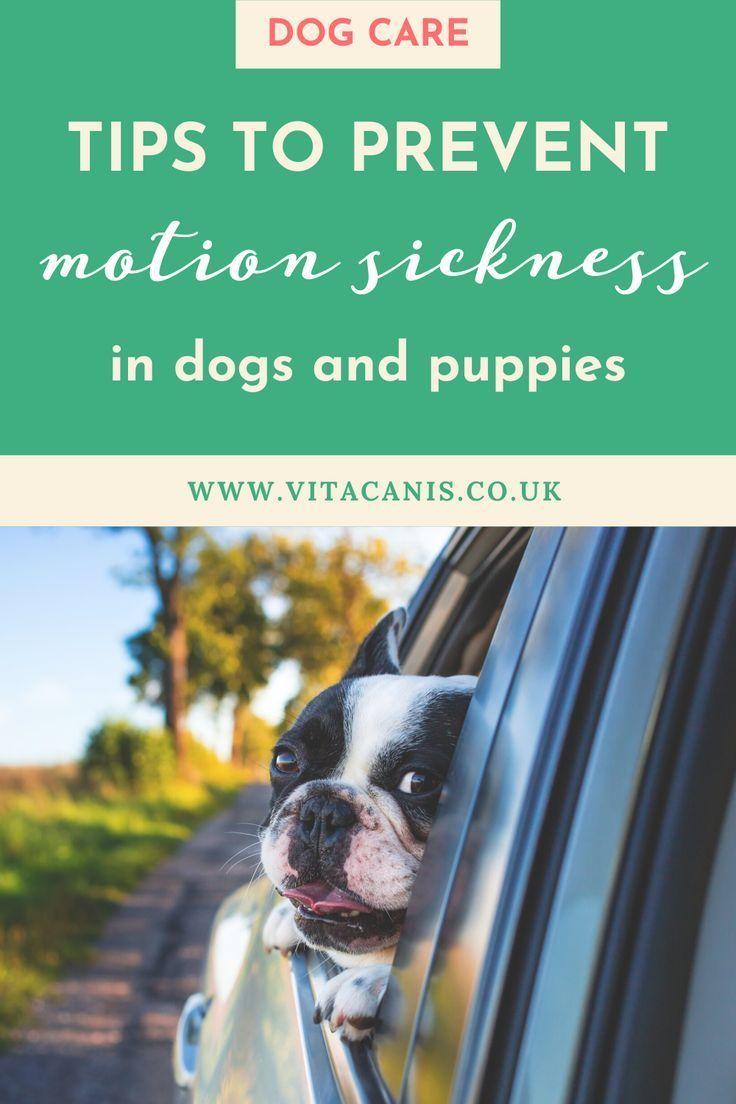 Pin On Dog Breeding And Healthy Recipes