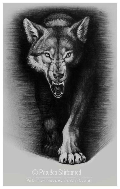 d1cca3054 Angry Wolf Sketch | Best Tattoo Designs | design | Wolf tattoos ...