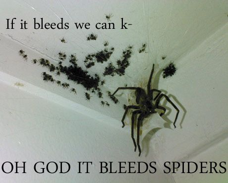 ALL HOPE IS LOST.: Scary, Creepy, Spiders, Stuff, Funny, Humor, Things, Baby, Animal