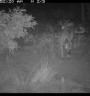 Wildlife Rescue Magazine suggests Reconyx HC600 wild dog at night -  Image courtesy of Gary Lukritz.