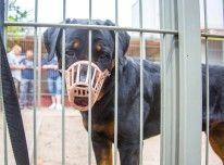 Besitzerin kämpft um das Leben von Rottweiler