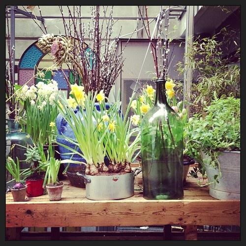 Happy Friday, happy garden