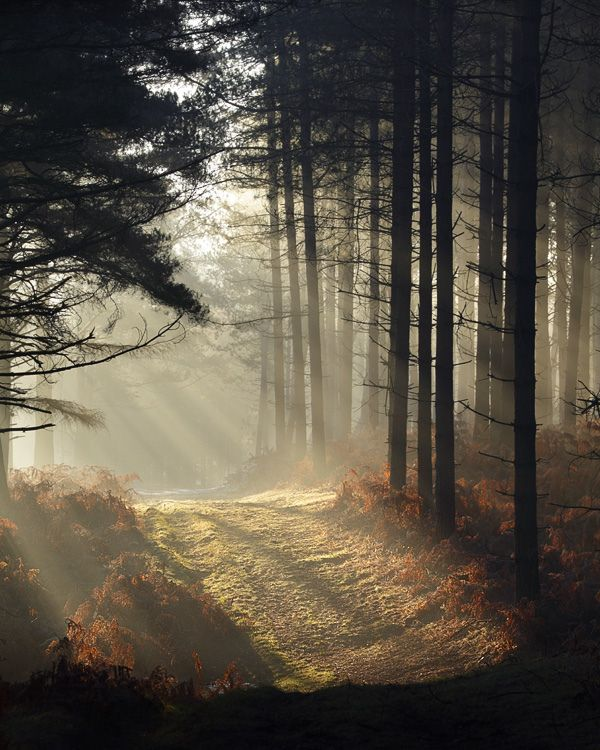 Forest dawn (New Forest, Hampshire, England) by milouvision. http://www.flickr.com/photos/milouvision/8383393947/