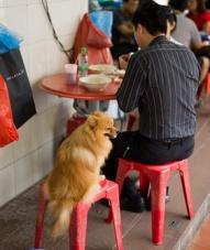 8 Best Dog-Friendly Restaurants in LA   Zagat