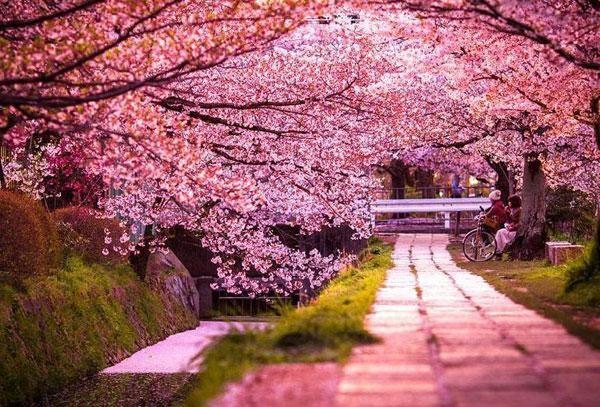 flores paisajes hermosos - Google Search
