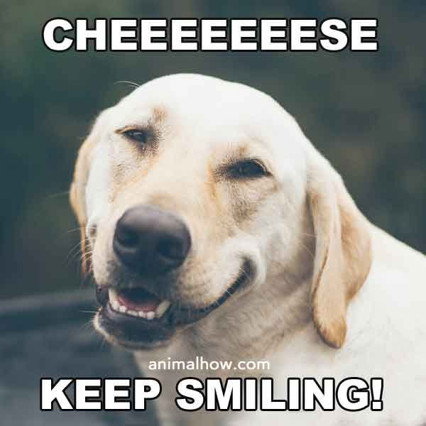 13 Really Funny Dog Pictures With Captions Funny Puppy Memes Cute Animals Puppies Funny Dog Pictures