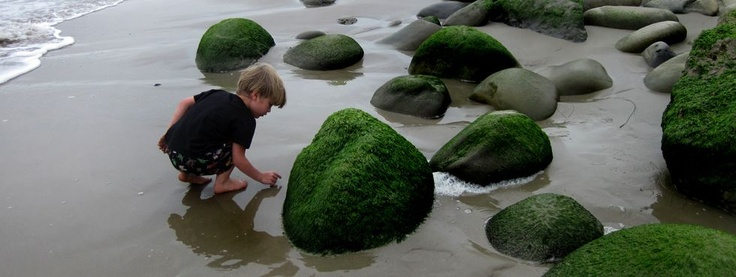 Low tide at Emma Wood reveals a wonderland of creatures, waiting to be explored